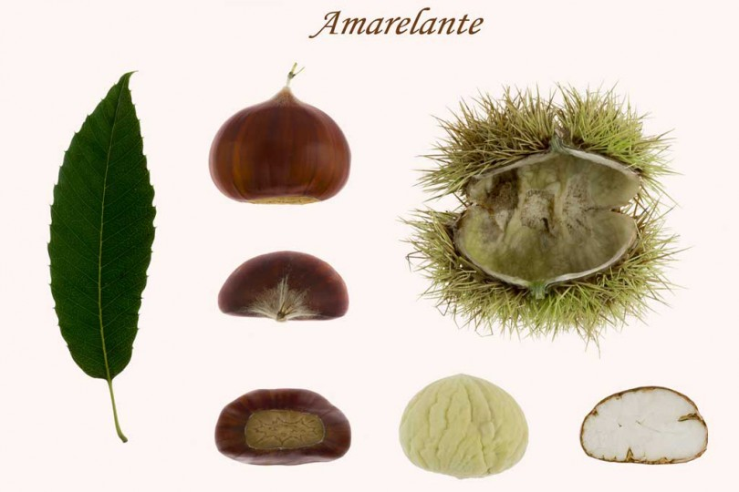 Change of the varietal structure of chestnut