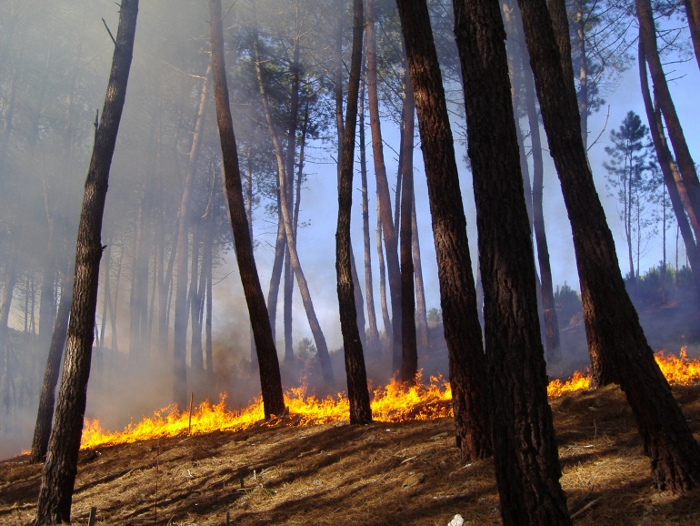 FIRE PARADOX: AN INNOVATIVE APPROACH OF INTEGRATED WILDLAND…