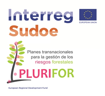 PROYECTO PLURIFOR