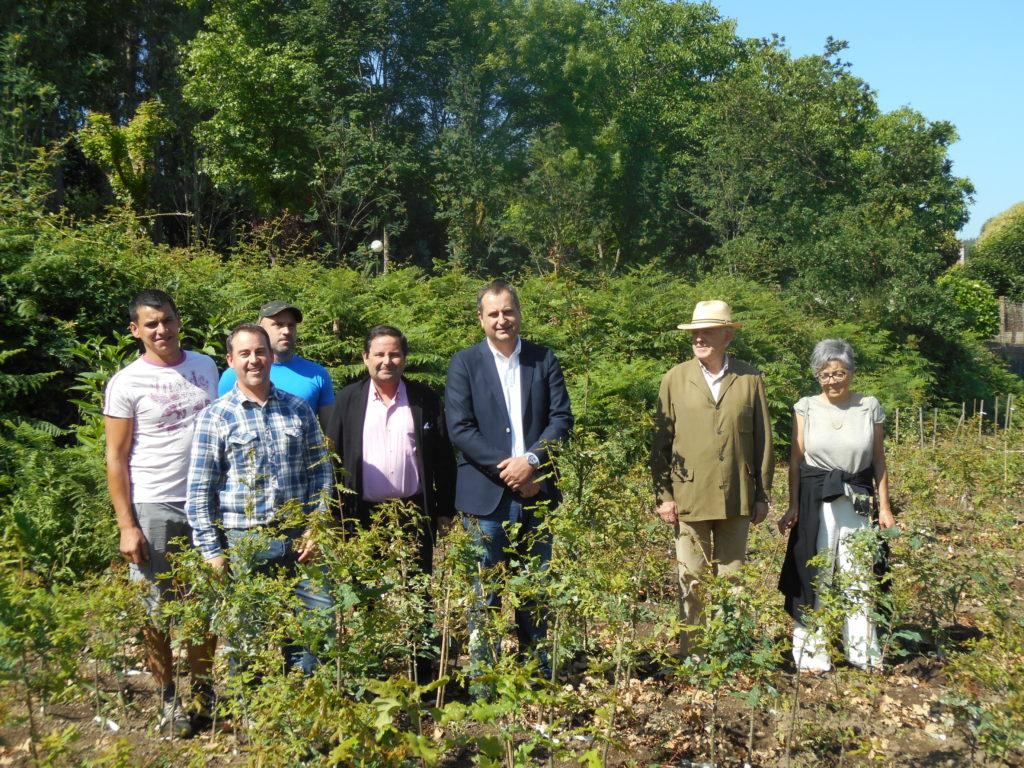 RURAL MINISTRY AND JUANA DE VEGA FOUNDATION COOPERATE IN A GENETIC IMPROVEMENT OF THE GALICIAN OAK