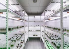 Laboratorio de cultivo in vitro