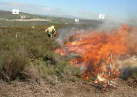WILDFIRE PREVENTIVE FUEL TREATMENTS IN SHRUBLANDS…