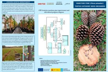 MARITIME PINE (Pinus pinaster) TESTED CATEGORY SEED ORCHARDS