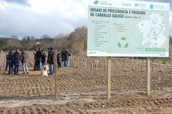 LOURIZÁN CIF AND JUANA DE VEGA FOUNDATION START PLANTING OAKS IN THE TRASMISAS' EXPERIMENTAL FIELDS